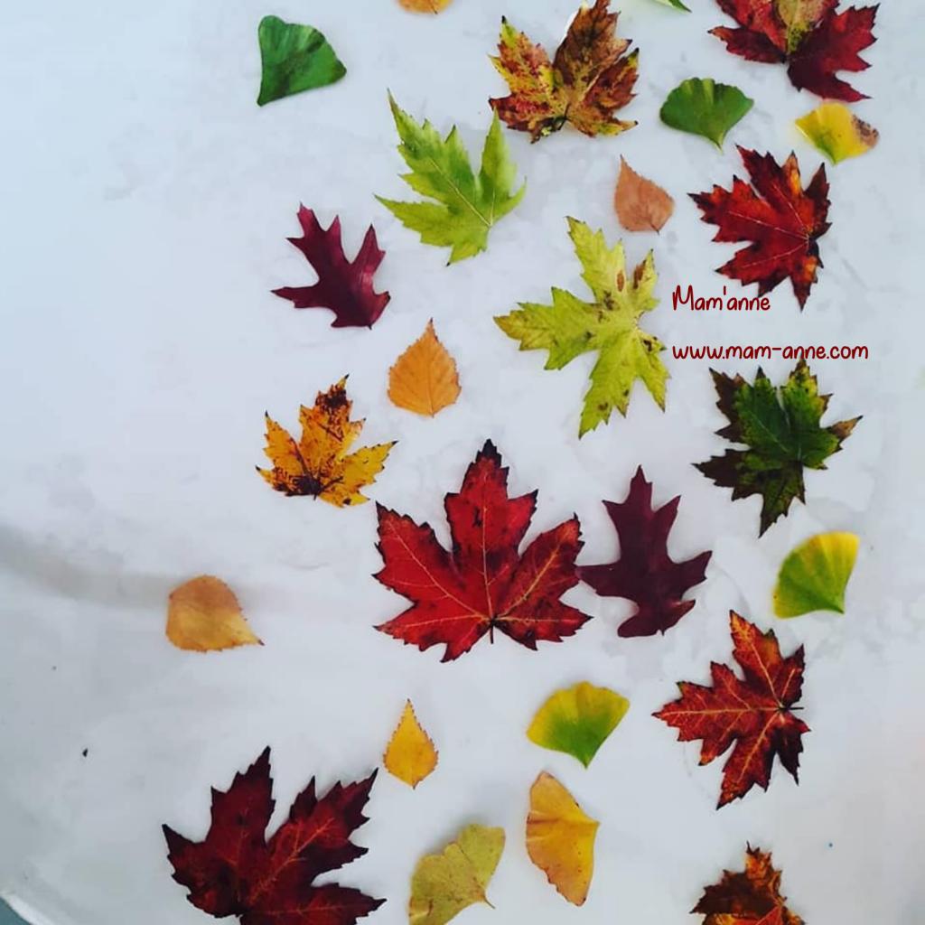 decoration deco automne feuilles